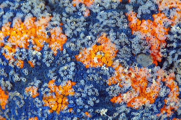Sea star surface macro_3