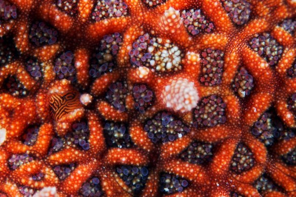 Sea star surface macro_6
